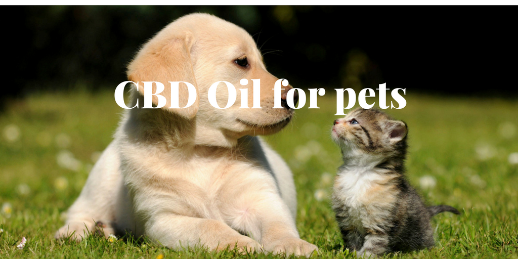 CBD Oil for Pets: Does it work for them too?