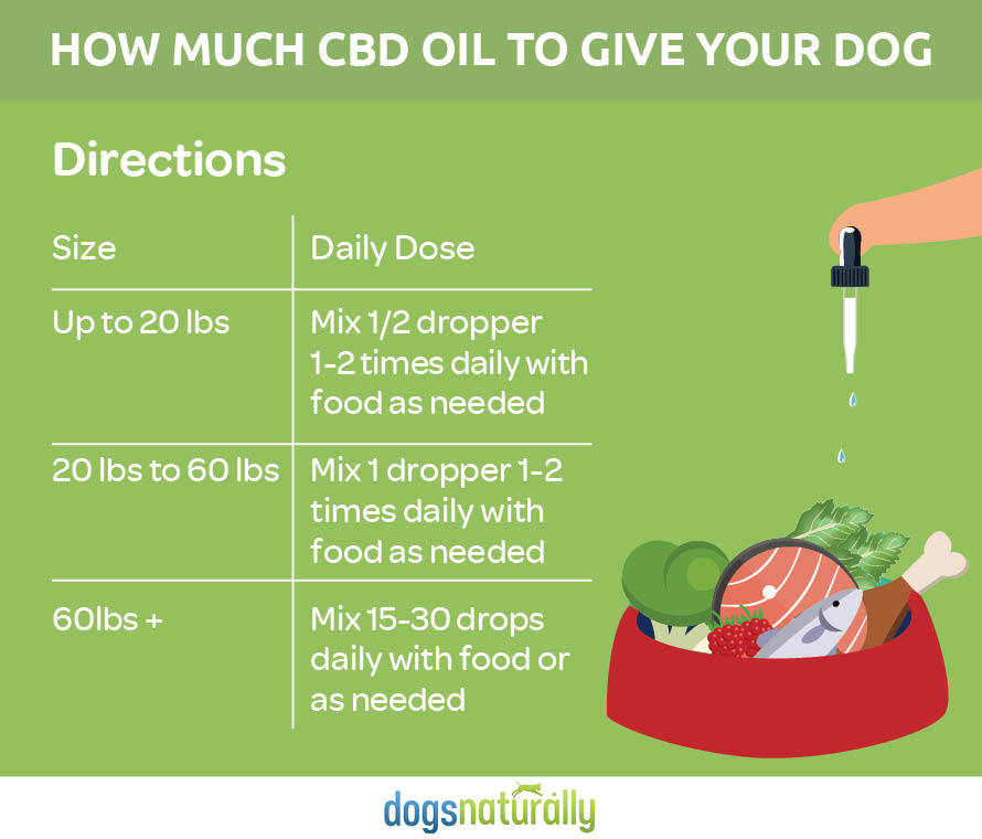 5 Best CBD Oil for Dogs 2019 [Must Read]