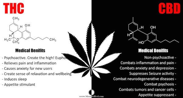 CBD vs THX benefits